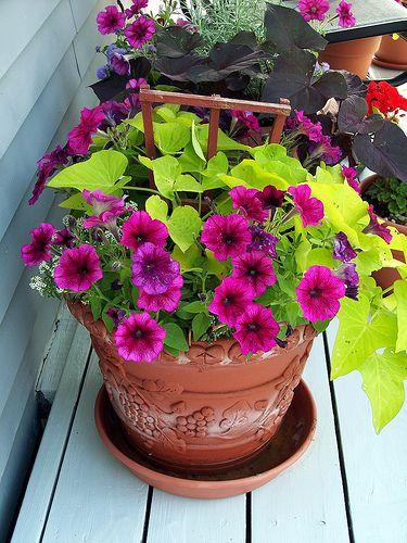 Potted Flowers Jardineria En Macetas Maceteros De Jardin Y