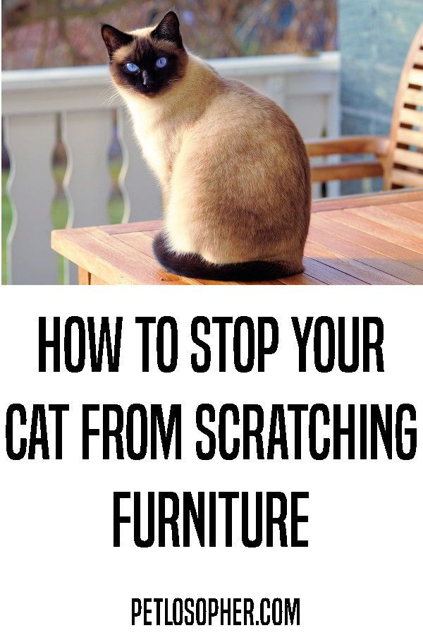 How To Stop Your Cat From Scratching Furniture | Furniture ...