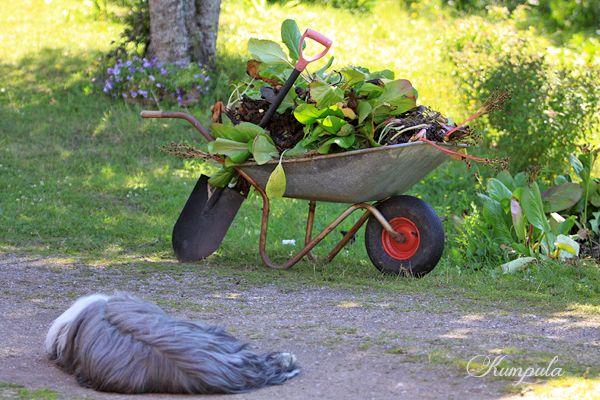 Puutarha-apulainen