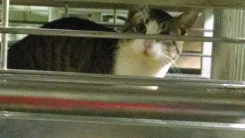 GLORIA HAS BEEN RESCUED !! THE 326TH CAT RESCUED FROM CCAC