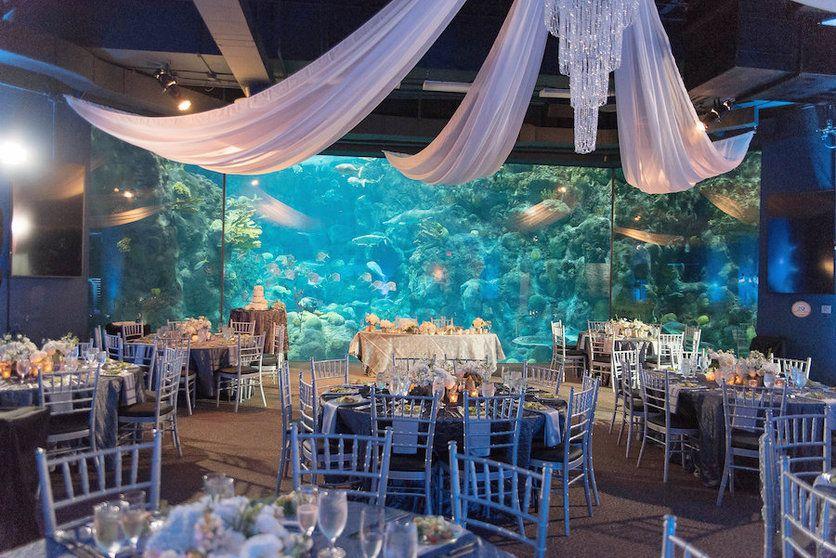 Modern, Under the Sea Downtown Tampa Wedding   Aquarium ...