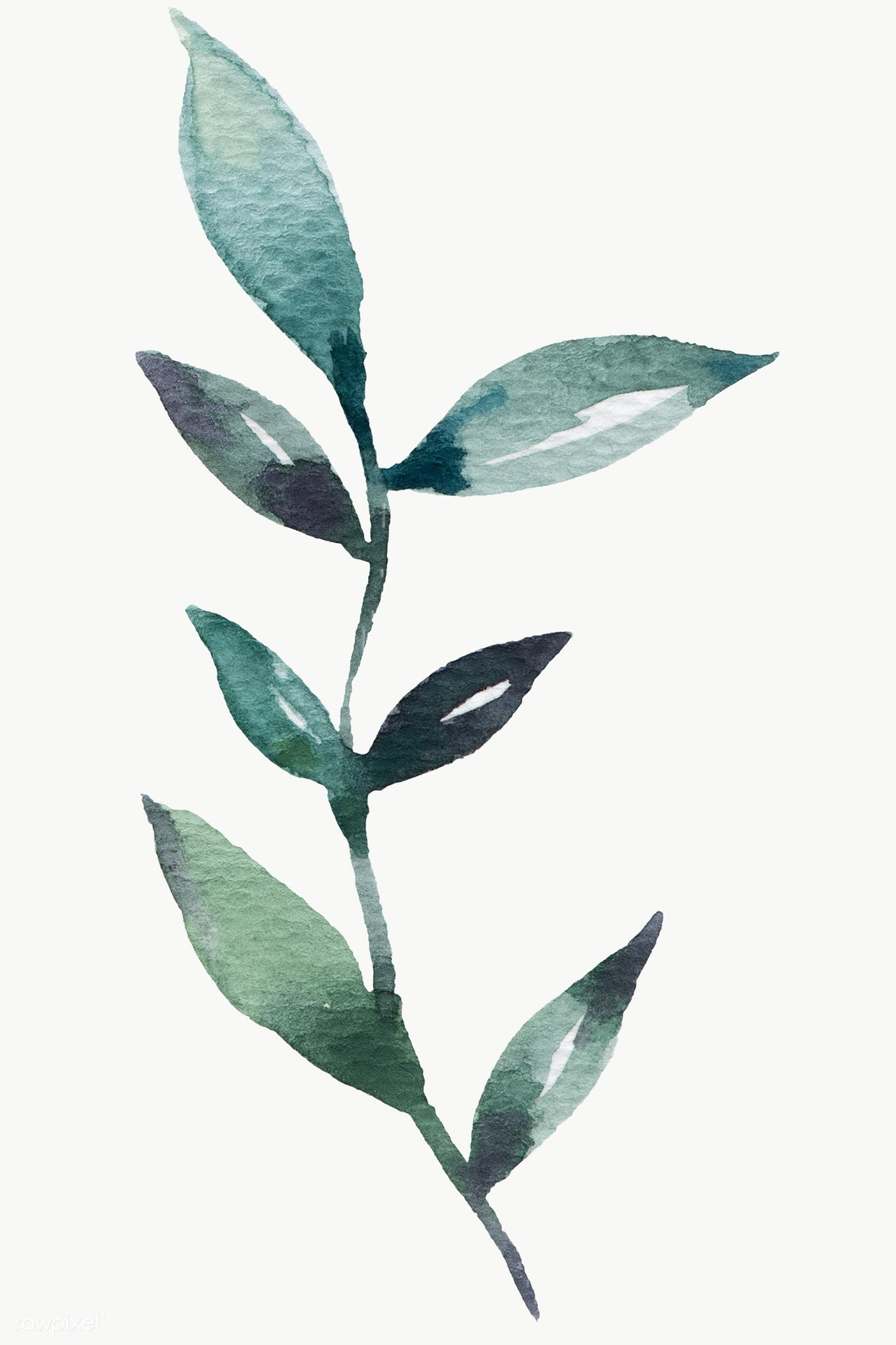 Download Premium Png Of Hand Painted Watercolor Green Leaf