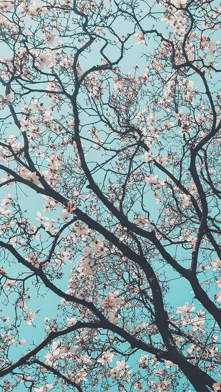 13 Spring Blossom iPhone Wallpapers Fundaluri