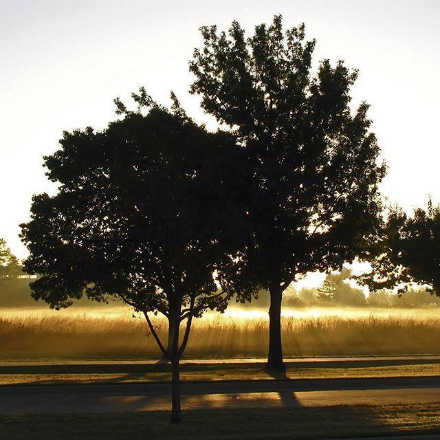 Pretty self-explanatory... #tree #trees #fog #mist #dawn #sunrise #contrejour #sunrays #sunray
