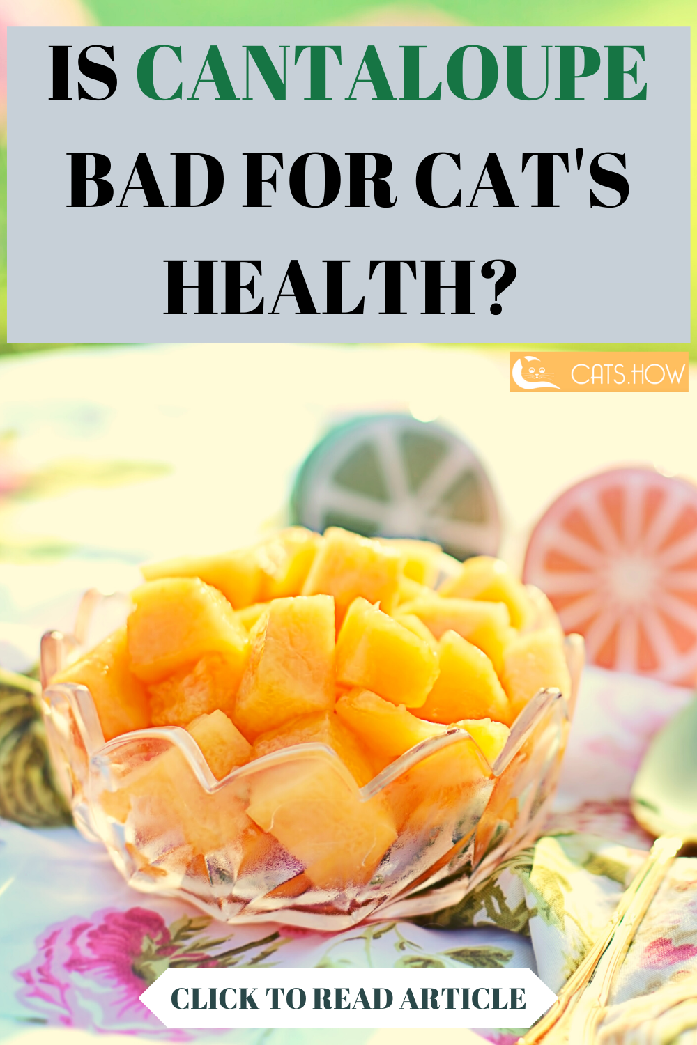 Can Cats Eat Cantaloupe (With images) Cantaloupe, Eat