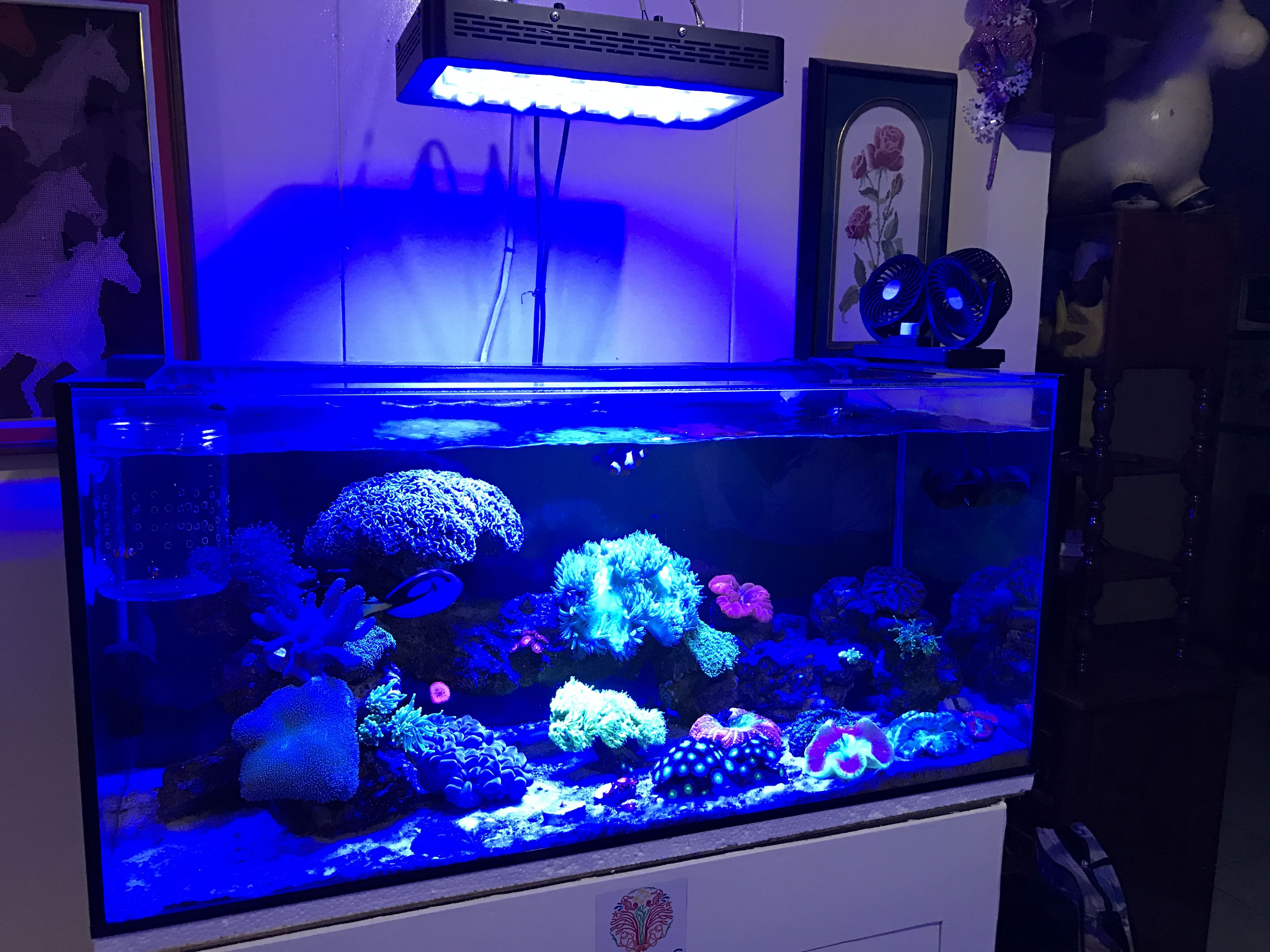 light lighting youtube lights on watch clip lamp aquarium