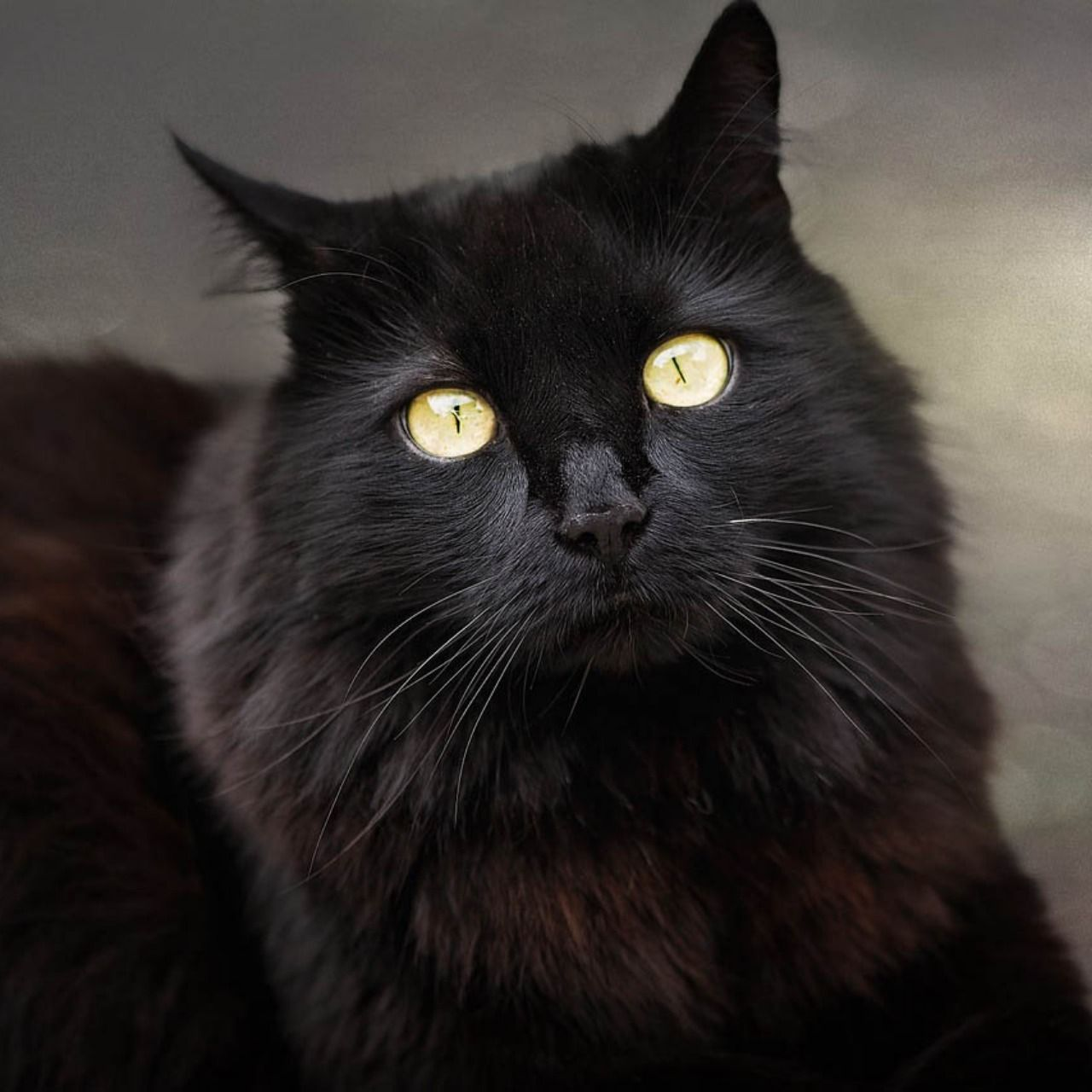 Cats with yellow eyes Cat eye colors, Cats, Black cat
