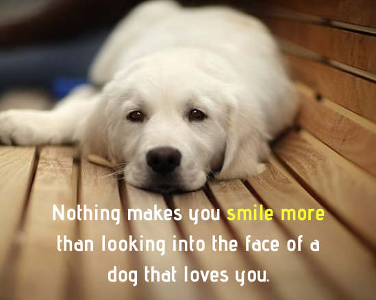 Nothing Makes You Smile More Than Looking Into The Face Of A Dog That Loves You Dog Quotes Love Pets Dogs