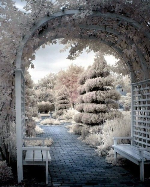 Beautiful, Snow White tree in the snow. Description from pinterest.com. I searched for this on bing.com/images