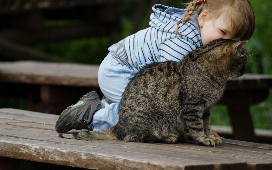 50 ภาพความน าร กของเด ก ๆ ก บน องแมวท ค ณเห นแล วจะต องอมย ม Pantip แมวน อย ส ตว สต ฟฟ แมว