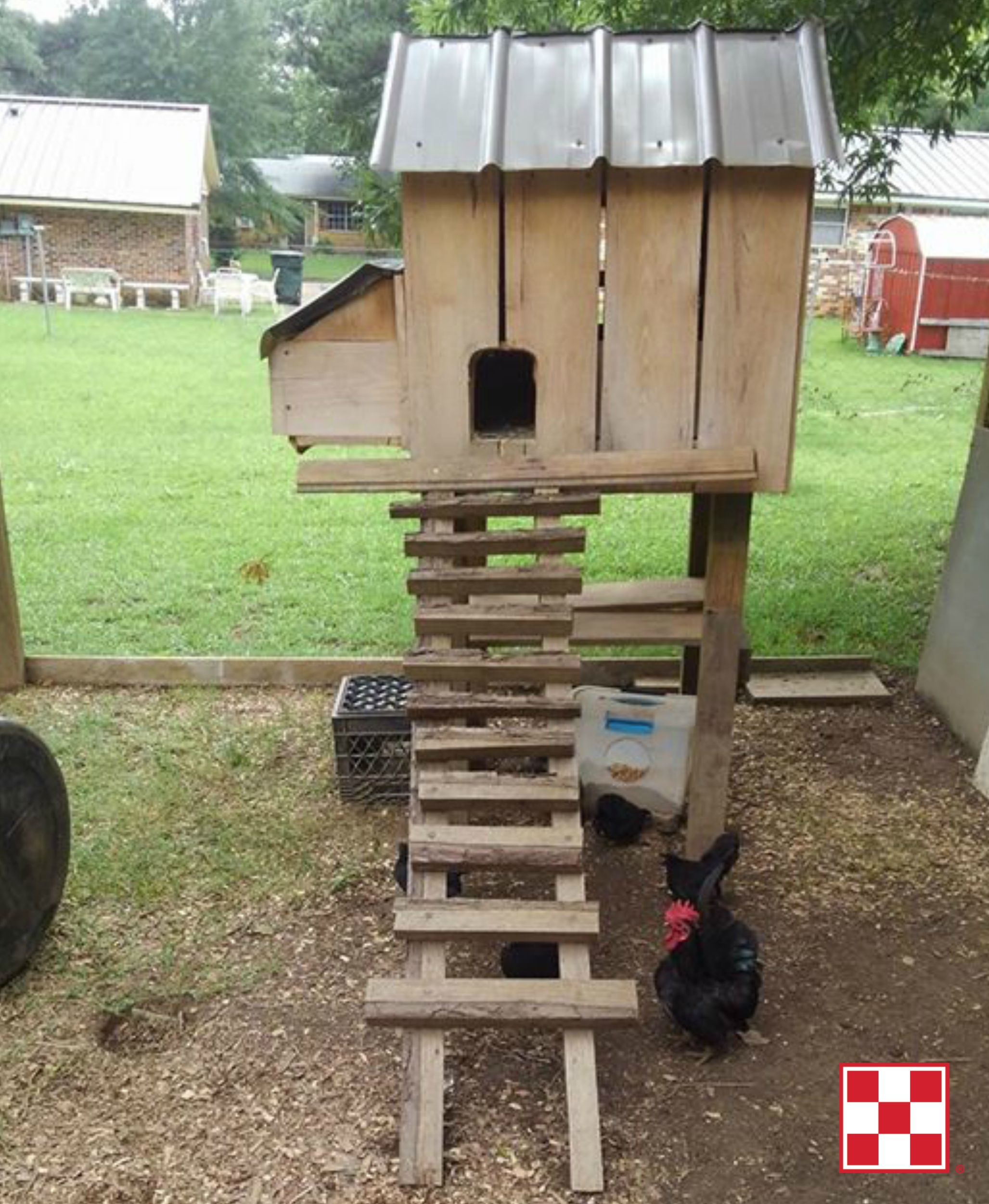Building A Chicken Coop Chickens Backyard Small Chicken Coops
