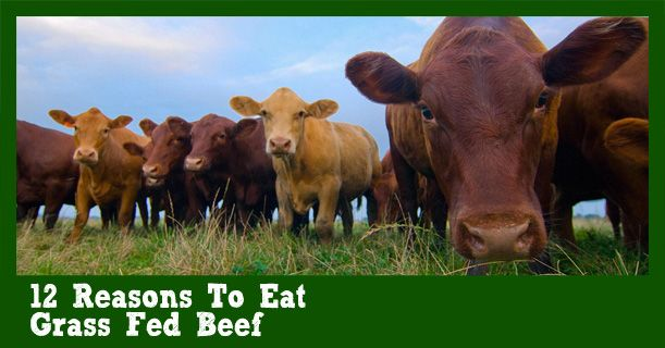 Did you know that eating the right type of beef can do wonders for your health?<br /> <br /> Despite what you may have been told about beef, there is actually a plethora of new research suggesting that one type of beef is extremely beneficial. That type of beef is grass-fed beef. Grass-fed beef is very different than its far more common counterpart, grain-fed beef. Understanding this distinction is vital to achieving optimal health.