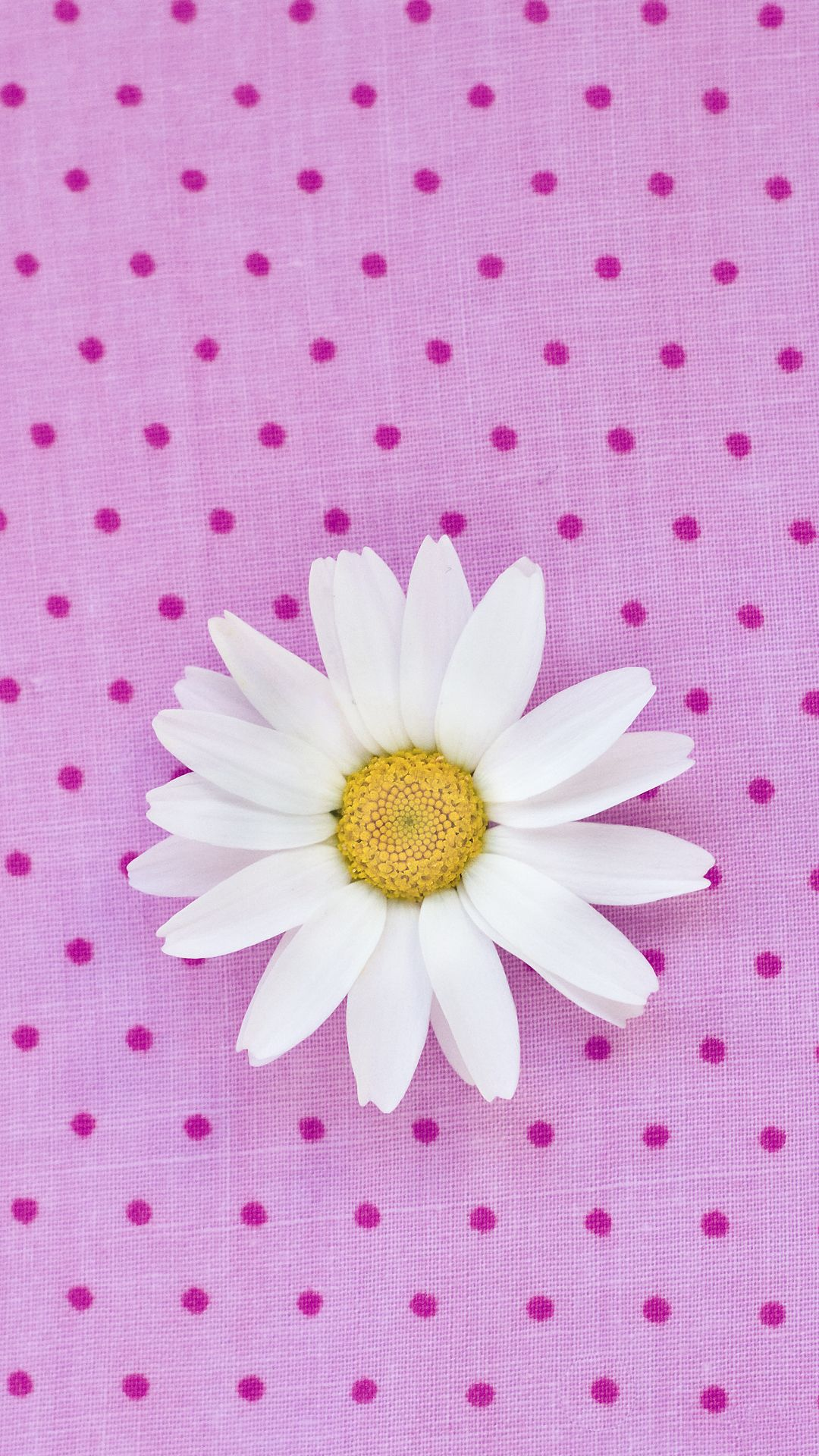 iphone 6 pink daisy wallpaper - bing images | pink wallpaper! in