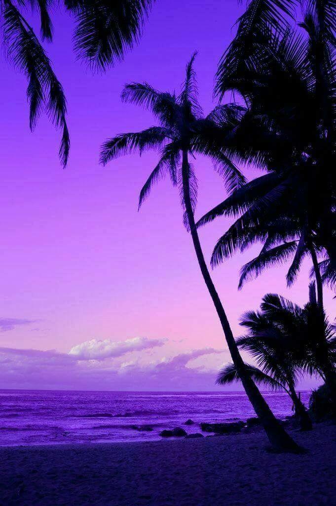 Palm Tree Purple Sunset Beautiful Landscapes Beautiful Sunset