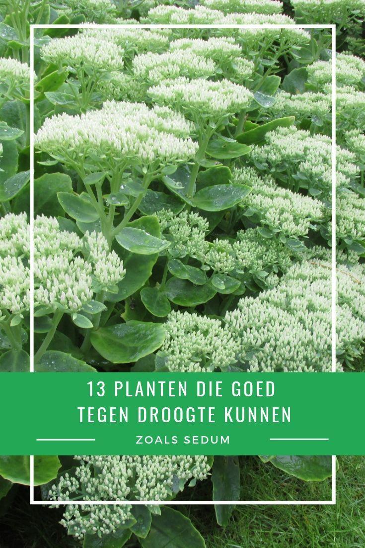 Verbazingwekkend 13 planten die goed tegen droogte en droge grond kunnen | Droge MA-52