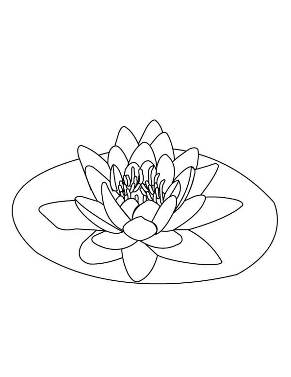 Lily pad lily pad on the middle of pond coloring page