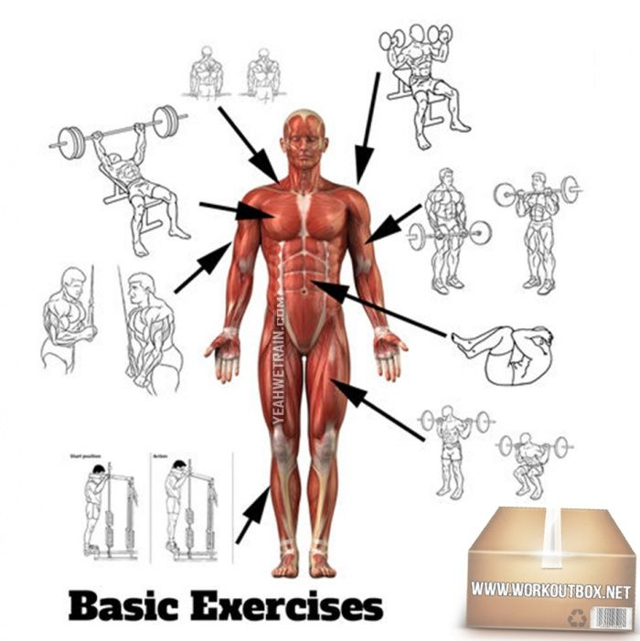Basic Front Body Exercises Chart Healthy Fitness Training Plan Fitness Hashtag Fitness Training Plan Workout Chart Fitness Training