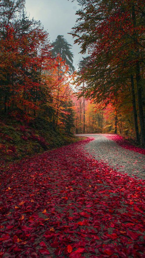 Fall Season Wallpaper For Smartphone Beautiful Nature Autumn Scenery Nature