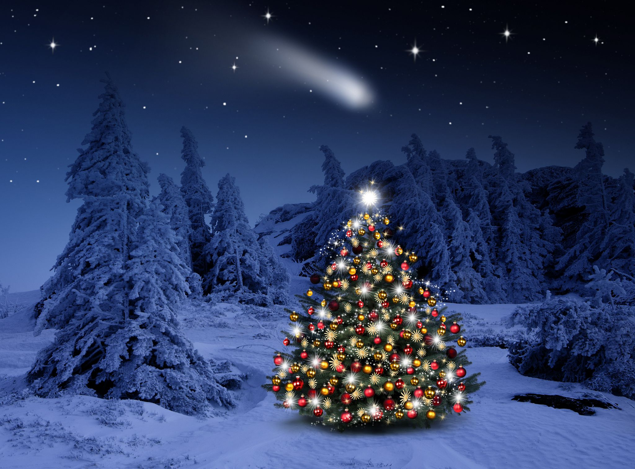 Lighted Christmas Tree In Winter Forest Computer Wallpapers Outdoor Christmas Tree Outdoor Christmas Tree Decorations Christmas Tree Lighting