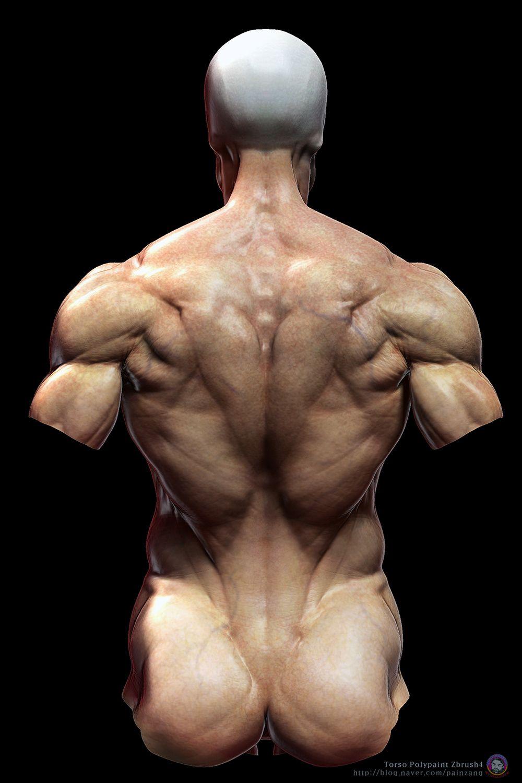human anatomy~skin by zbrush | 参照(ヌード・男) | Pinterest ...