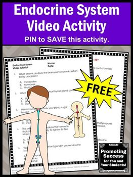 This free printable endocrine system worksheet and video will supplement your human body systems unit for also th grade teacher rh pinterest