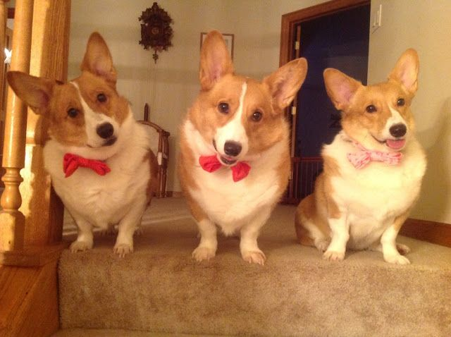 Bentley, Barkley and Bella