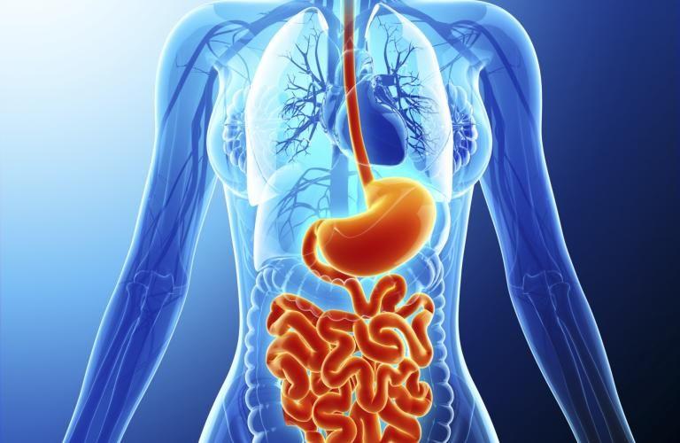 أمراض الجهاز الهضمي وعلاجها قد تكون آلام المعدة والغازات والحموضة ومشاكل الهضم الأخرى مزعجة في كثير