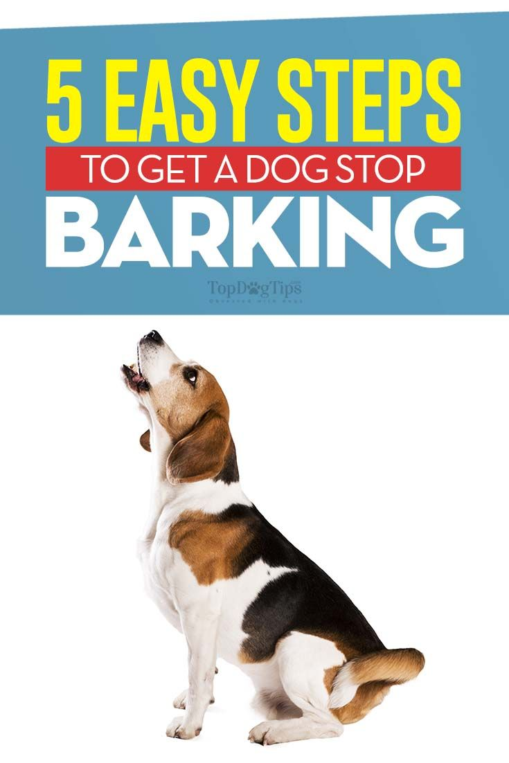 5 methods to get a dog to stop barking stop dog barking