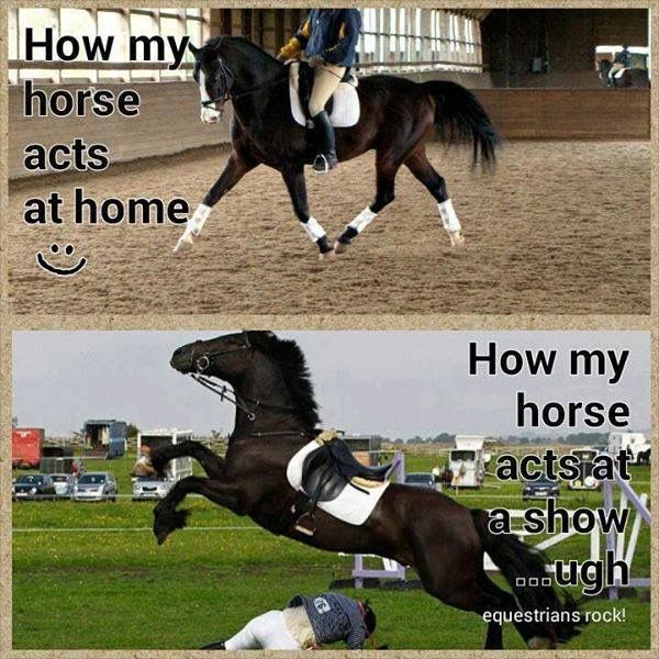 Funny Pony Quotes: Pin By Liny On Funny Horse Sayings