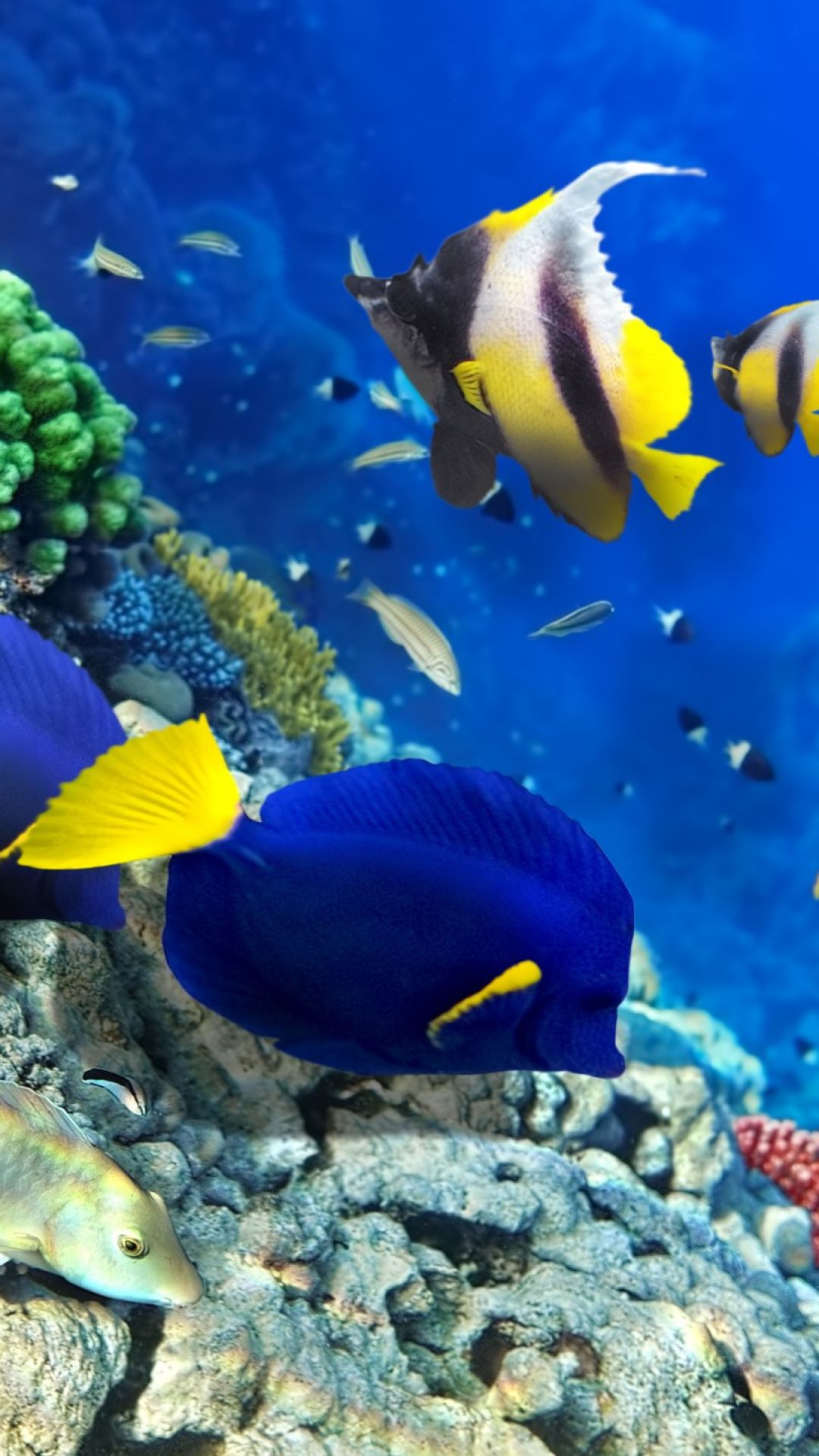 Download Wallpaper 1080x1920 Fish Algae Corals Underwater Sony Xperia Z1 Zl Z Samsung Galaxy S4 Htc One Hd Backgroun Ocean Creatures Sea Fish Underwater Ocean underwater life fish corals algae