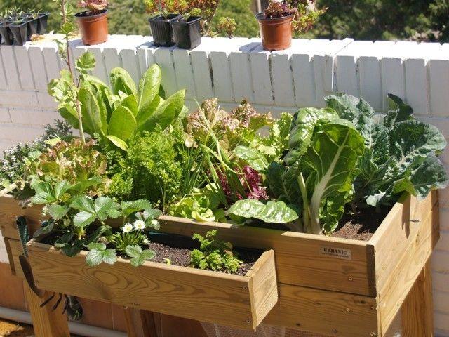 C mo hacer un invernadero casero para huerto urbano huerto casero pinterest invernadero - Invernadero casero terraza ...