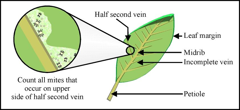 Diagram of a leaf photosynthesis diagram pinterest diagram diagram of a leaf photosynthesis ccuart Image collections