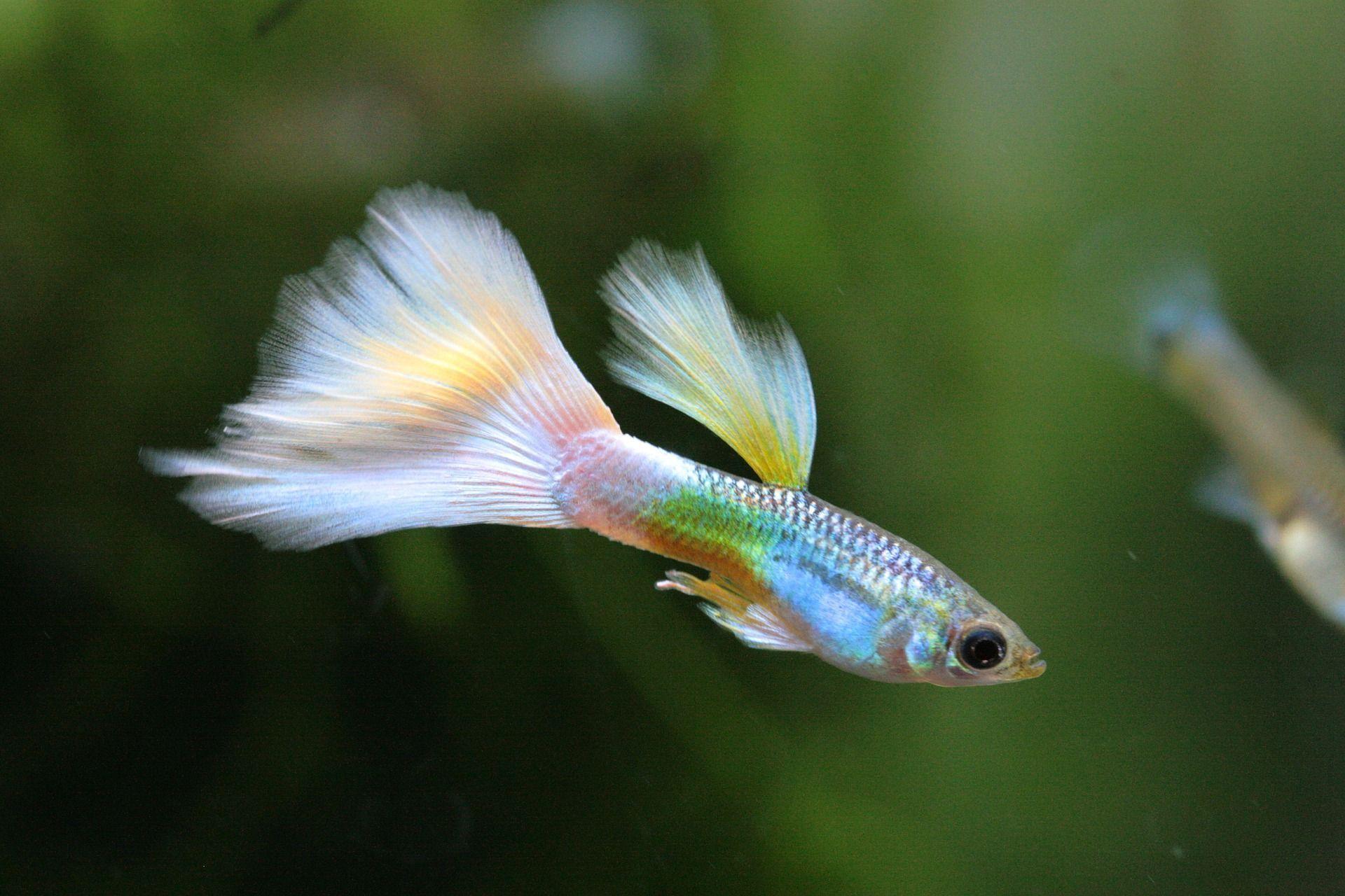 Best Freshwater Fish For Aquarium 5th Is The Coolest You Ve Ever Seen Aquariumfreshwaterfishanimals Fresh Water Fish Tank Guppy Fish Community Fish Tank