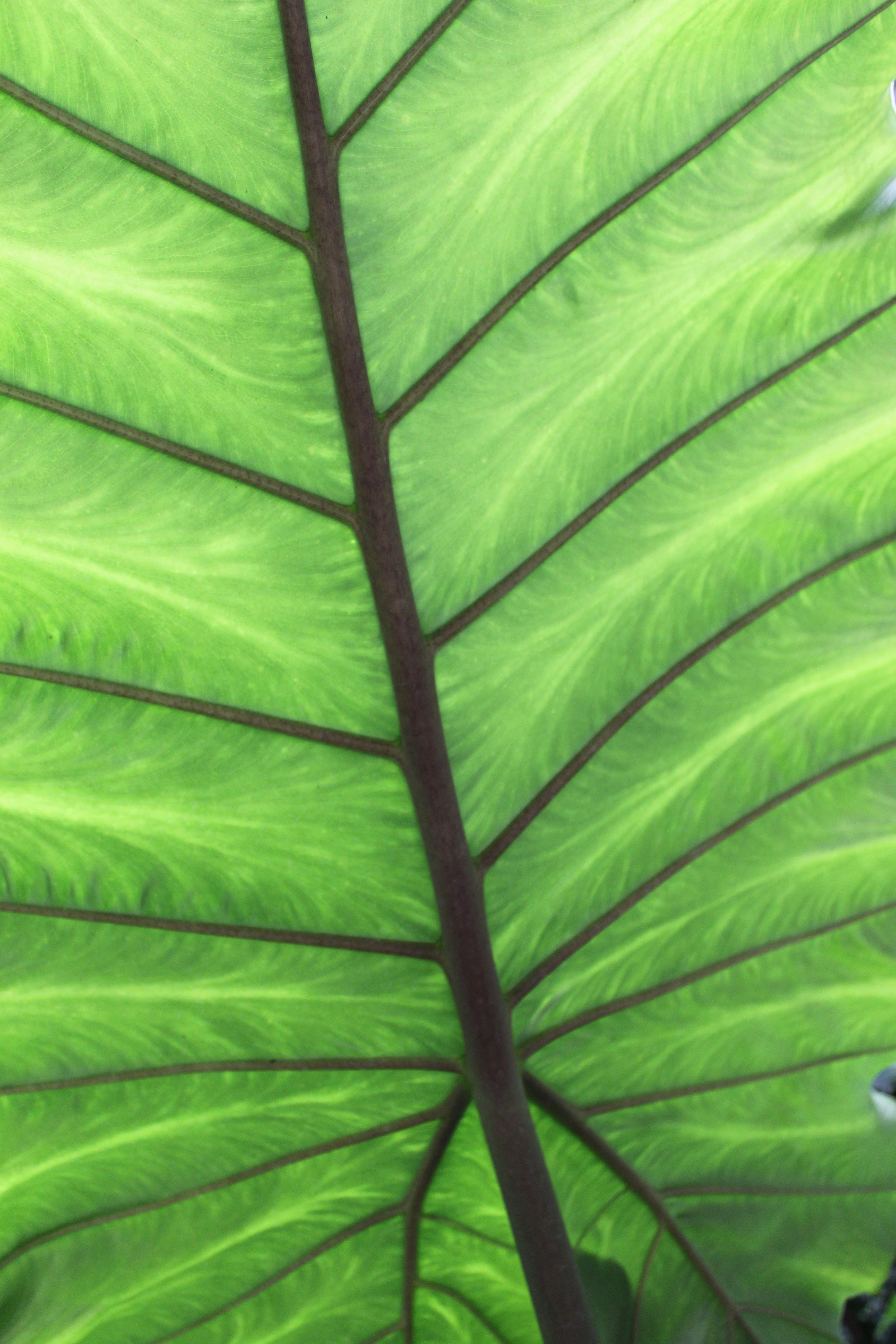 light through leaf | Garden services, Plant leaves ...