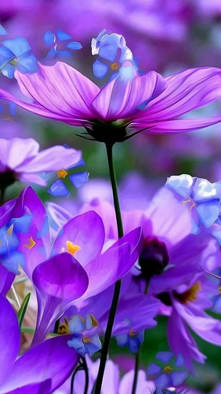 Soft Beautiful Picture Of Purple Blue Flowers Nature