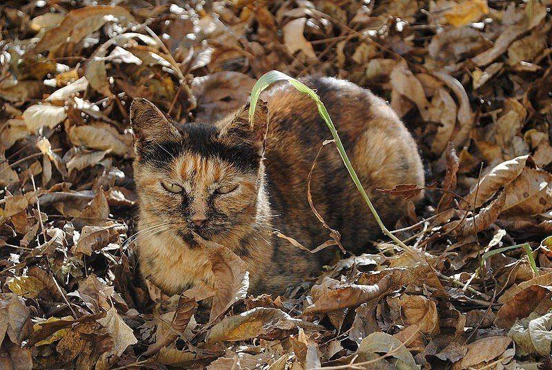 очистите раковин, коты маскировщики фото того, чтобы