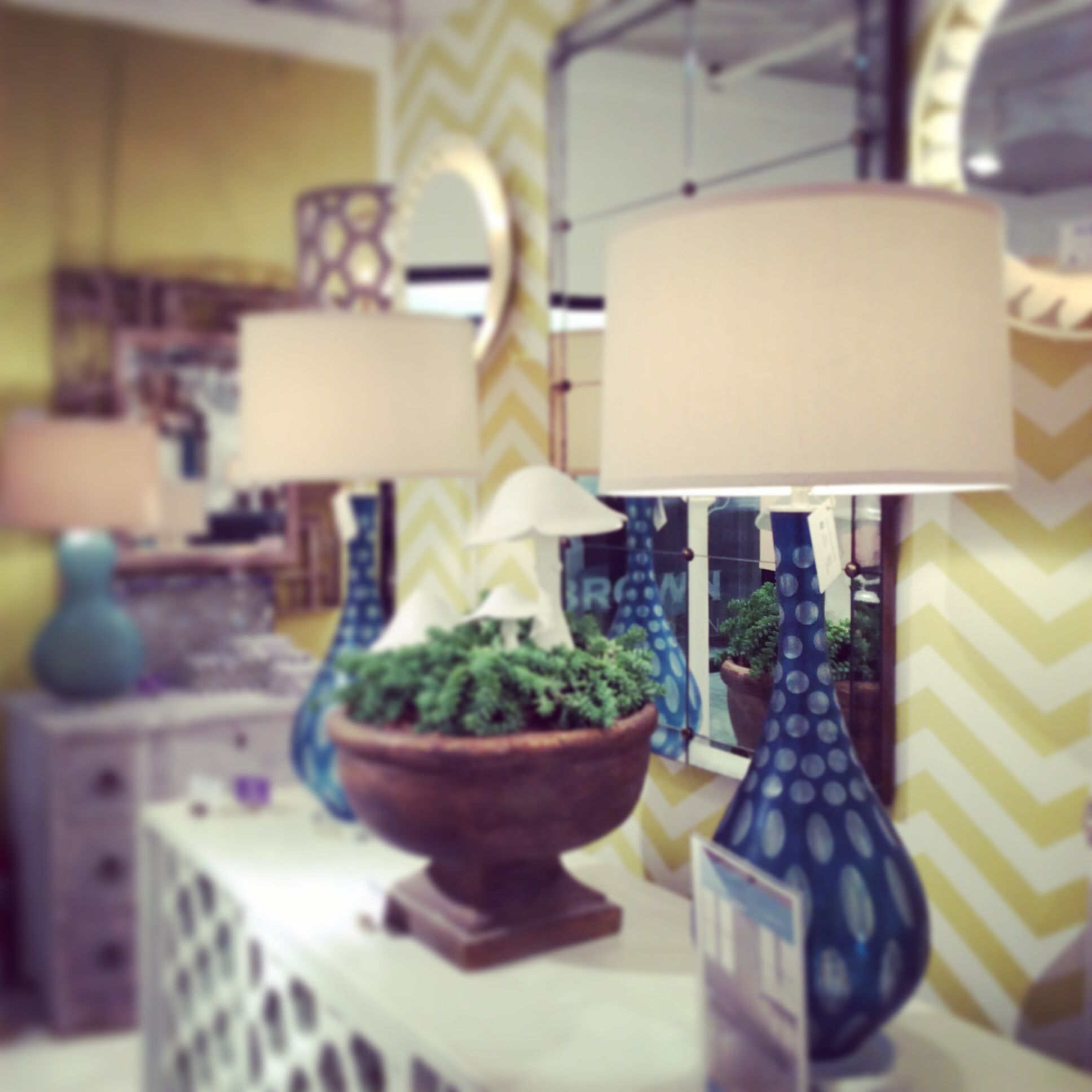Showroom Succulents Mrbrownhome Design Tilt Shift Happy