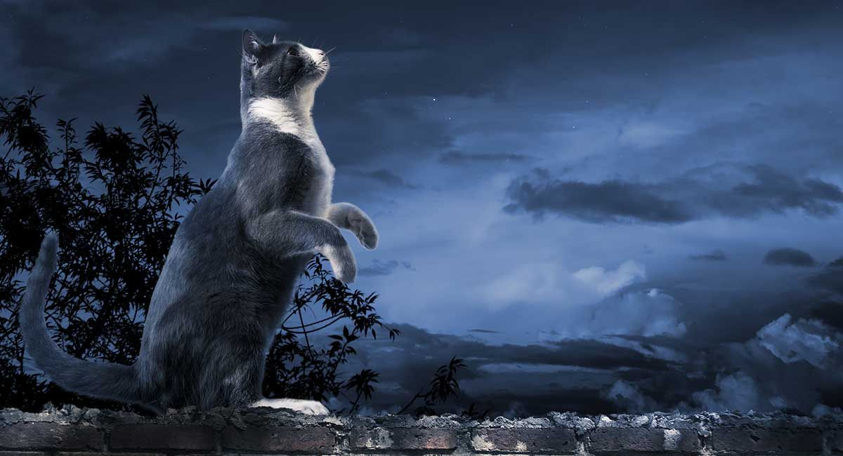 Related image Cats, Starry night, Polar bear