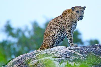 Sri Lanka wild