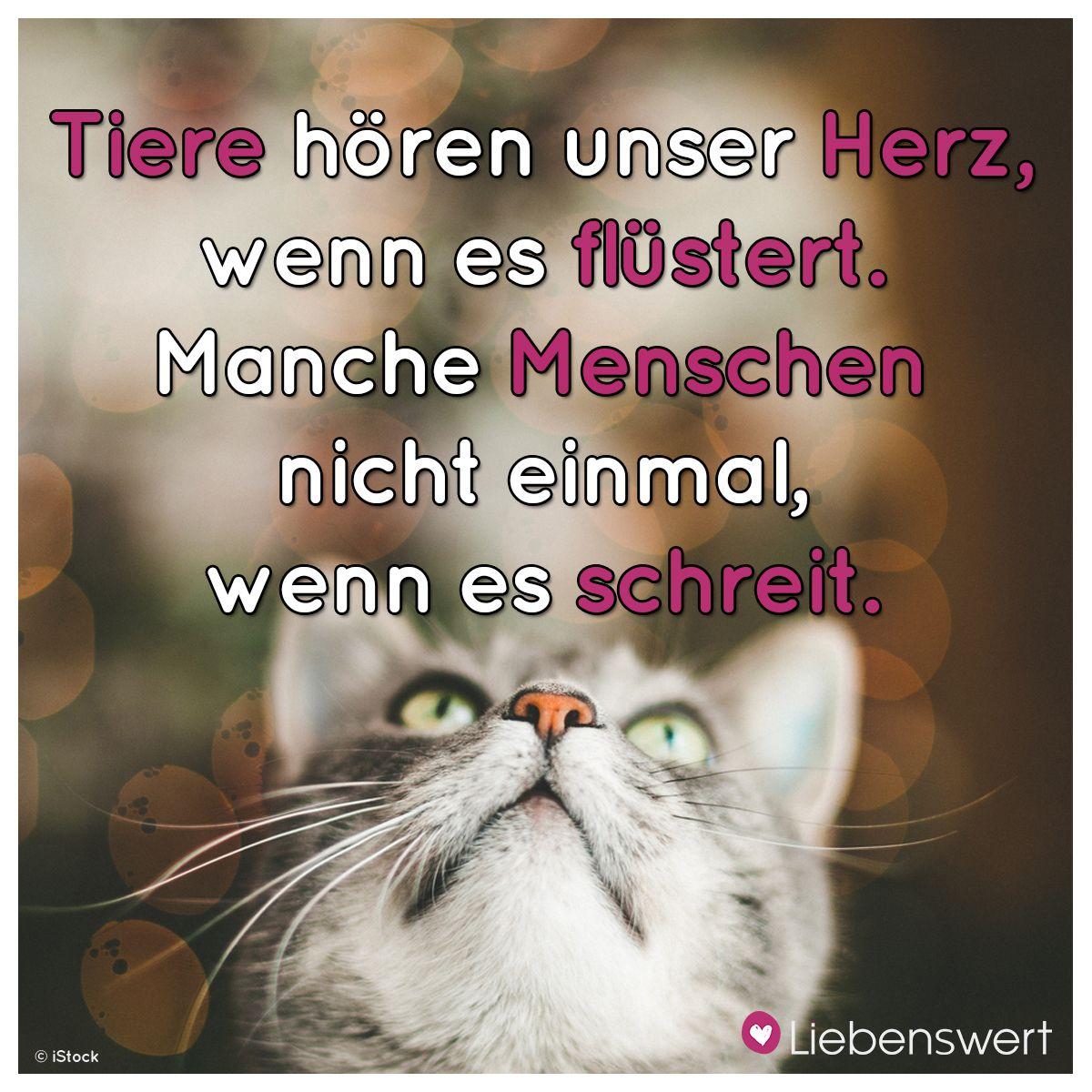 Sprüche Tiere Liebe Zitate Trauer Tiere 2019 10 31
