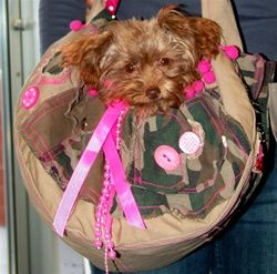Camo Dog Carrier. Hip, fashionable and comfortable! This is the one I want for Cooper but it has pink on it. Pink for mommy! :)