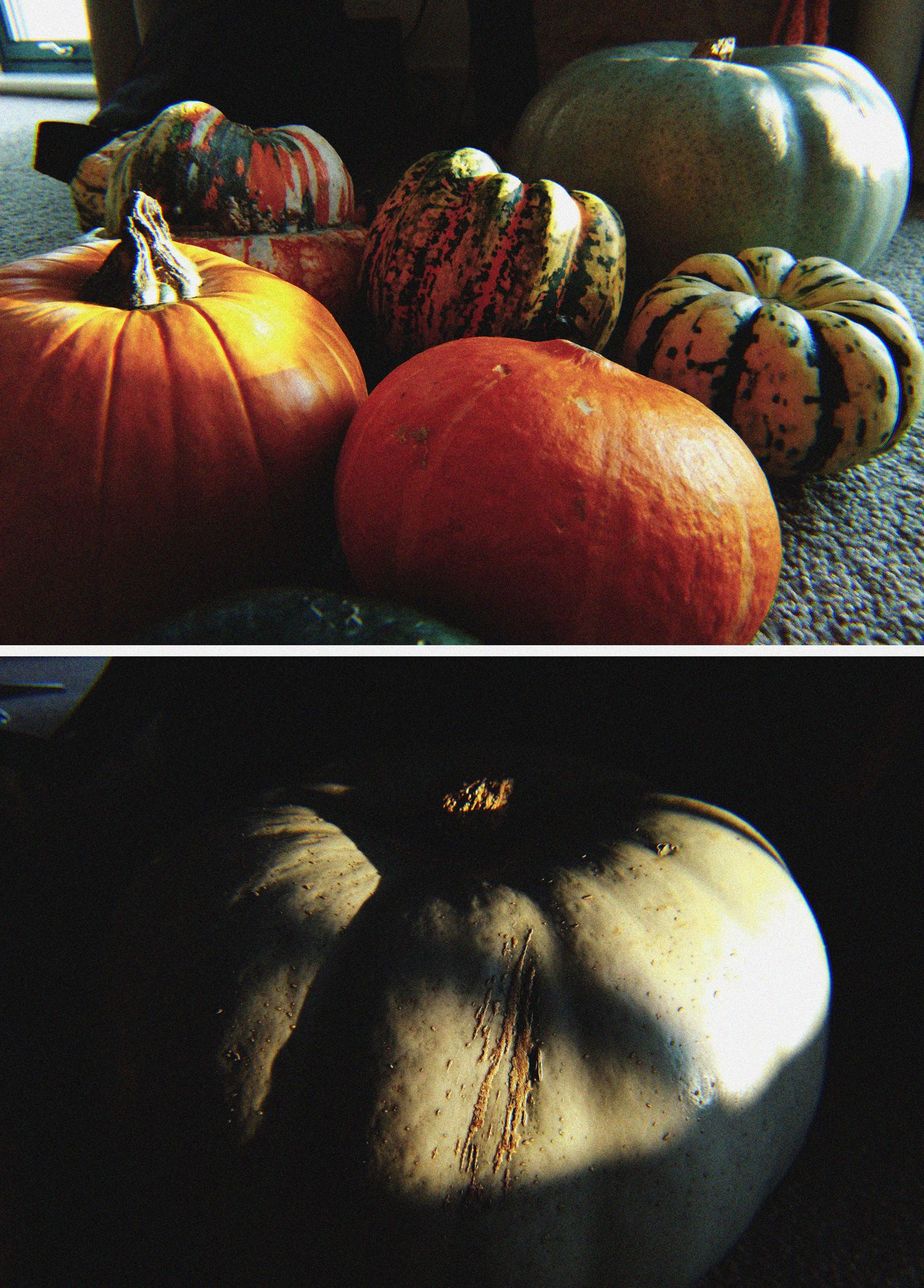 How Do I Plant Pumpkin Seeds And When Seeds Pumpkin Plants