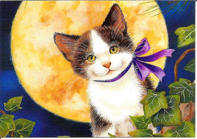 gatito y luna