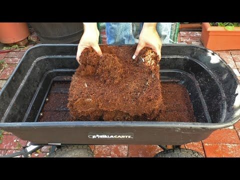 c6f3c07adebad1d76eb7852e265a26c4 - How To Use Coconut Coir In Gardening