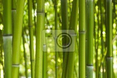 Wall Mural bambus bamboo 06 - asian - big • PIXERSIZE.com