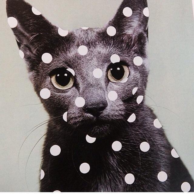 dotty cat