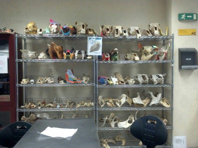 Asombroso Mi Laboratorio De Anatomía Composición - Anatomía de Las ...