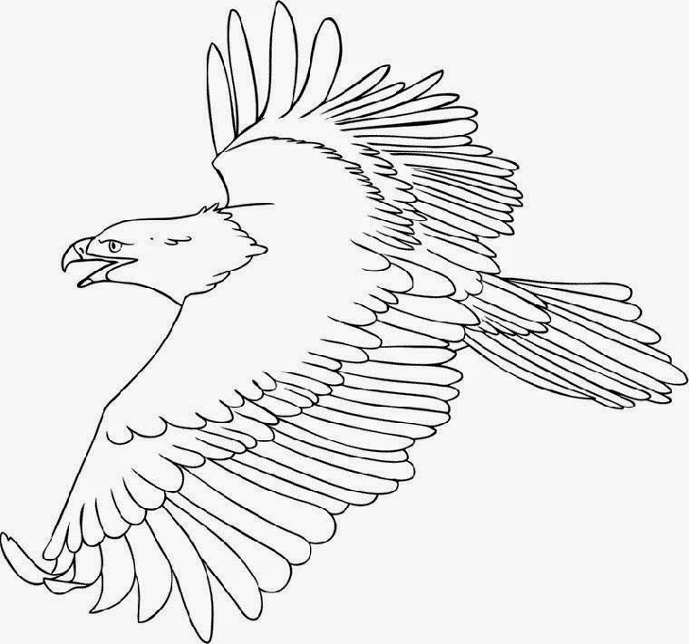 Bald Eagle Head Coloring Page Bird Coloring Pages Eagle Drawing