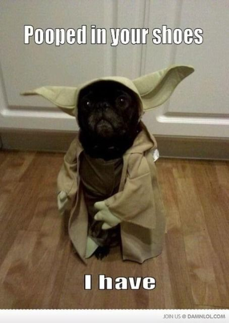 Yoda Dog Too Funny To Not Pin Dog Halloween Funny Animal