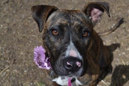 6 / 22 - Petango.com – Meet Hope, a 2 years 1 month Terrier / Mix available for adoption in NEWARK, DE Address  455 Stanton Christiana Road, NEWARK, DE, 19713  Phone  (302) 998-2281  Website  http://www.delspca.org/  Email  frontdesk@delspca.org